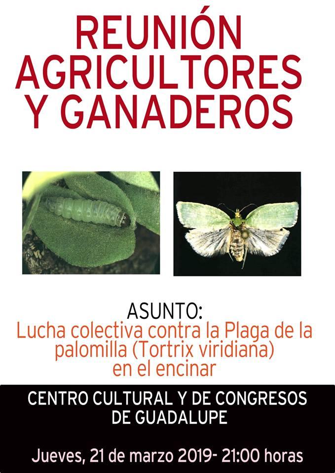 Reunión sobre la plaga de la palomilla 2019 - Guadalupe (Cáceres)
