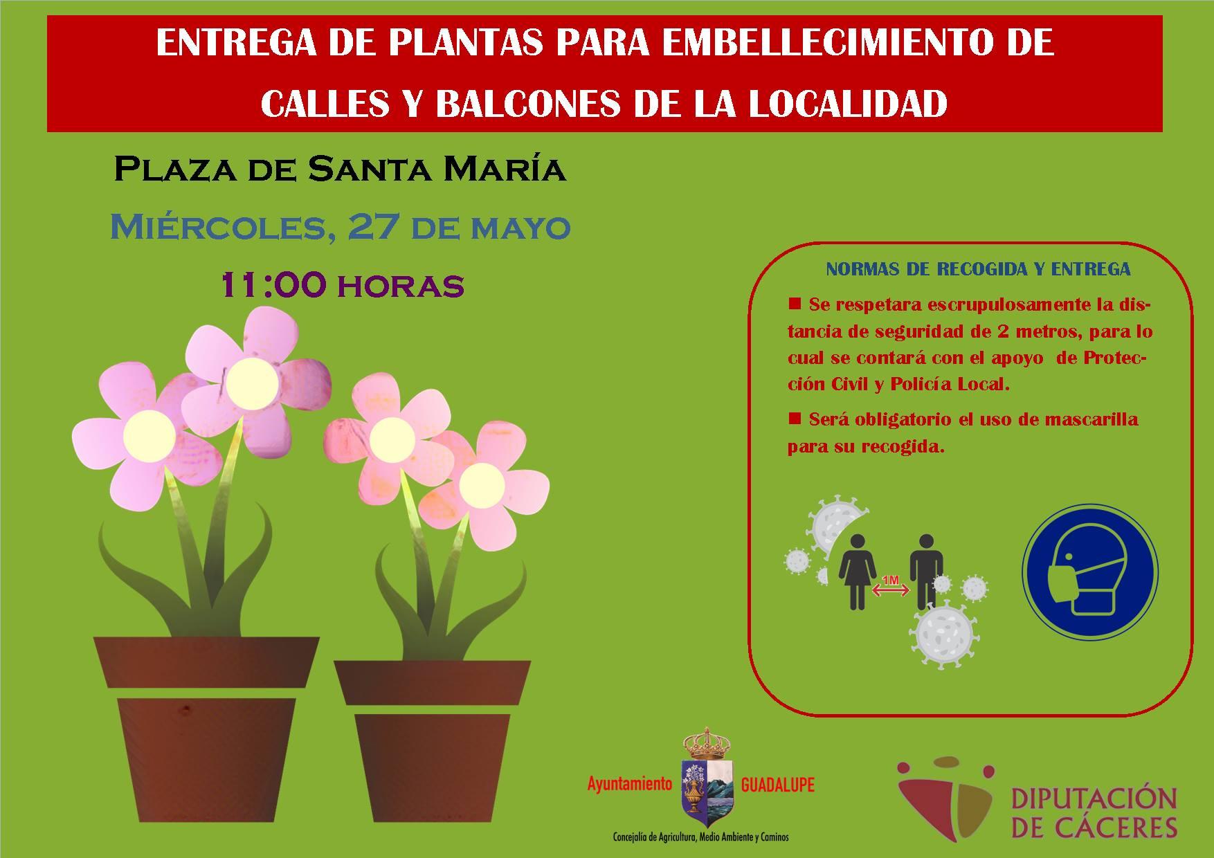 Entrega de plantas para embellecer 2020 - Guadalupe (Cáceres)
