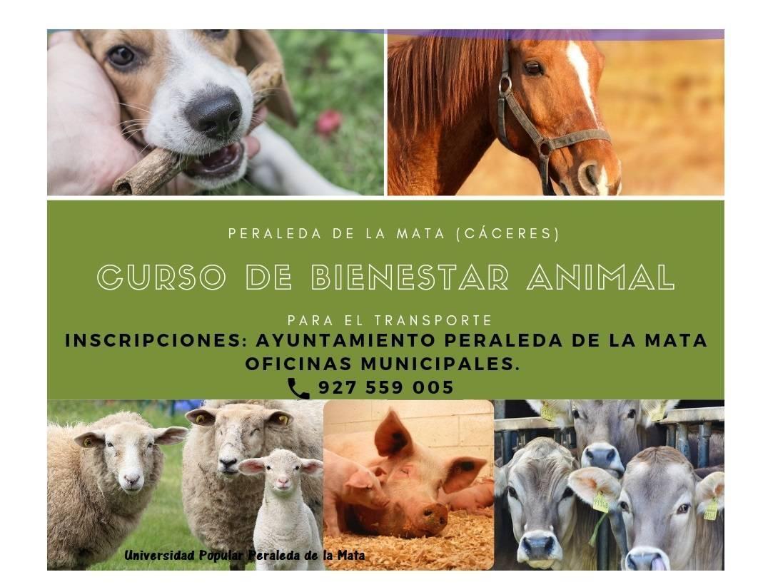 Curso de bienestar animal para el transporte (2021) - Peraleda de la Mata (Cáceres)